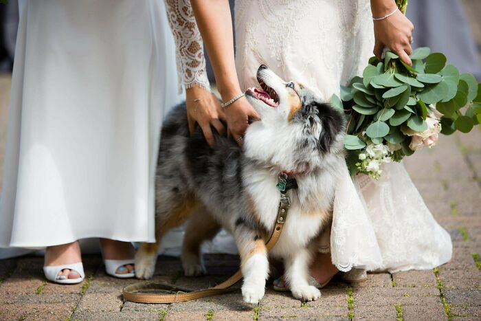 Got (Gay) Married A Year Ago Today. Here's Our Flower Pup 'Mirin Us Brides