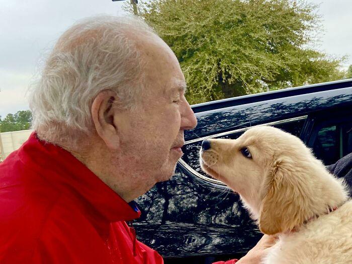 10-Week Old Golden Puppy Mirin Pappy