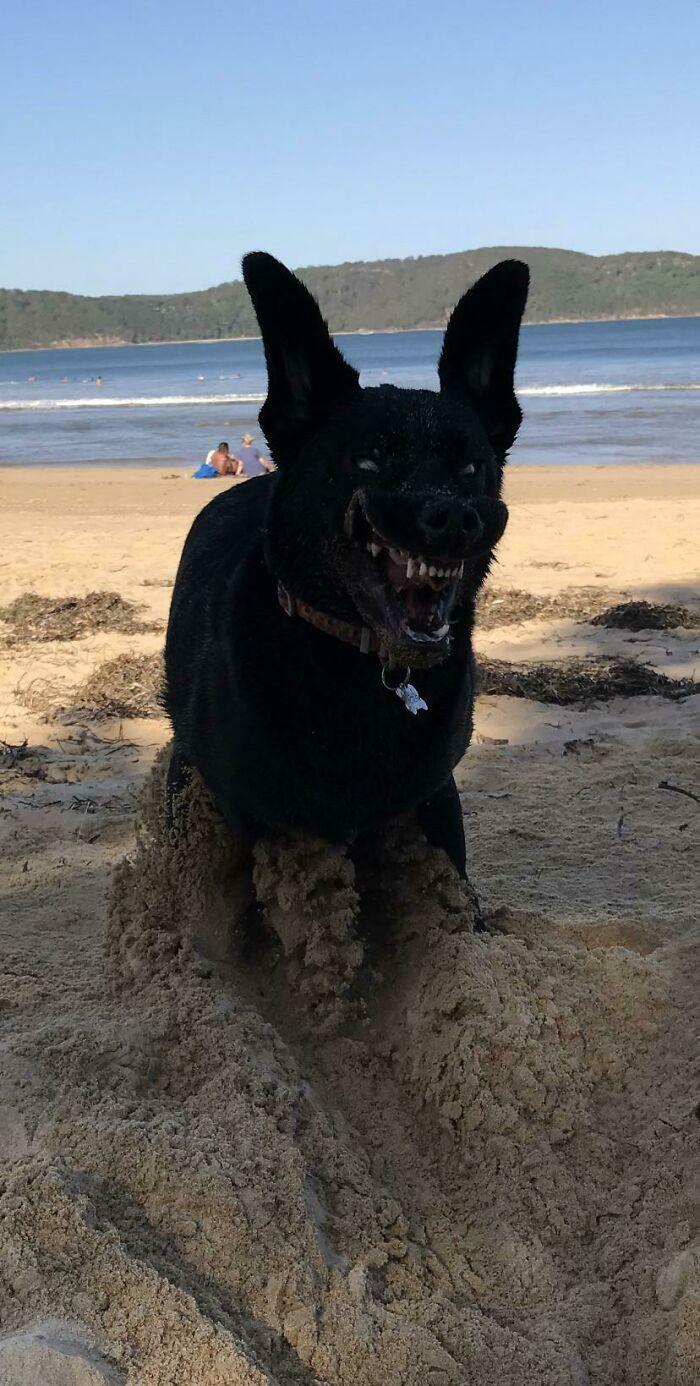 Le encanta cavar