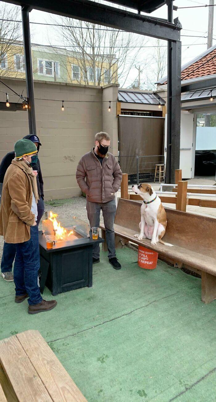 Fui a mi bar local de perros, y el perro de mi hermano decidió ir a hacer amigos con estos 3 tipos. Se unió a su grupo y pasó el rato