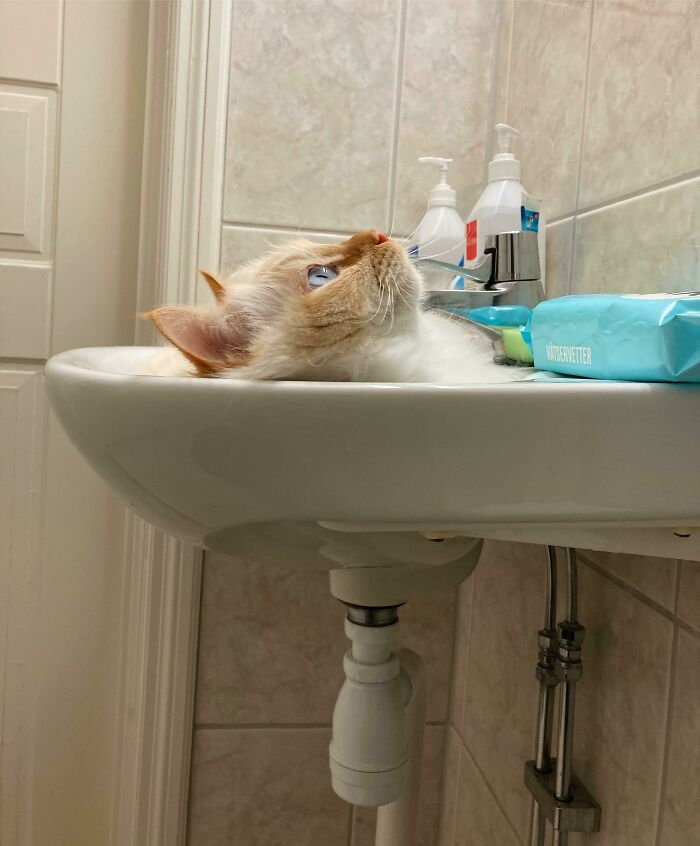 My Cat Looking Like He Flushed Himself Down The Drain
