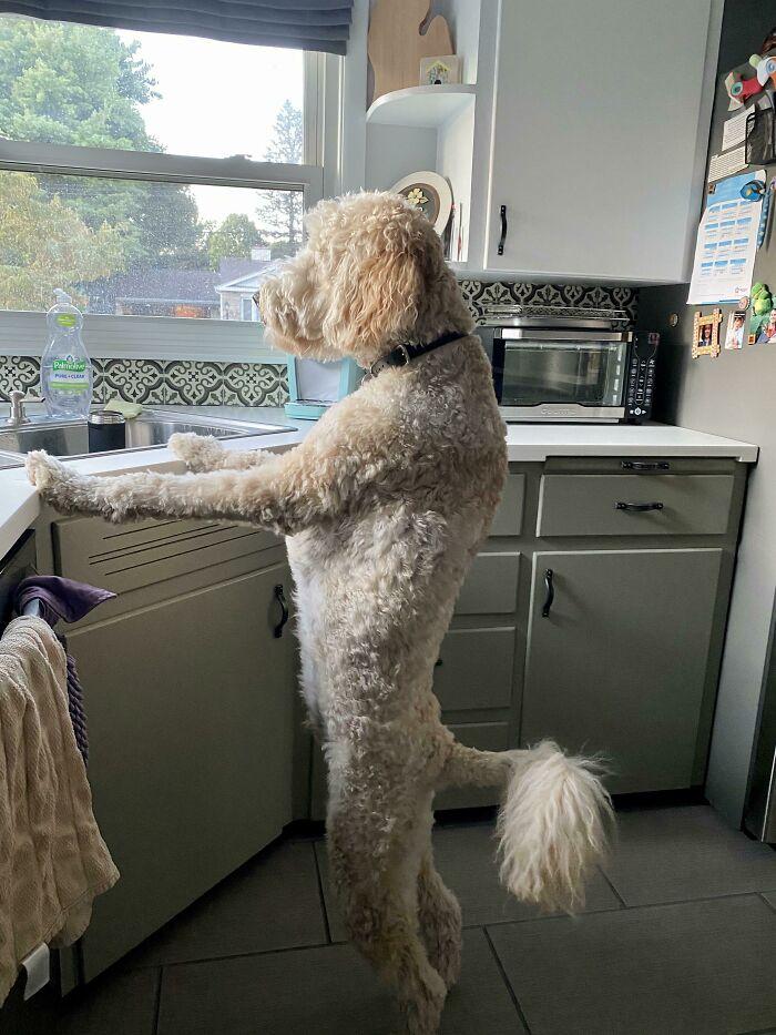 ¡Me encanta cuando llego a casa y él ya ha fregado los platos!