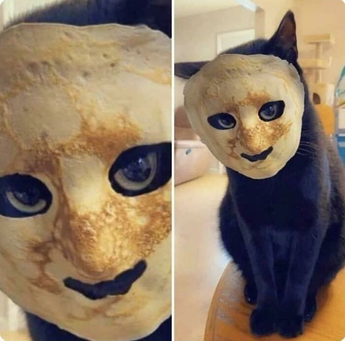 When You Put A Pancake On Your Cat's Face Because You Think It's Gonna Be Cute But Instead It Gives You Nightmares