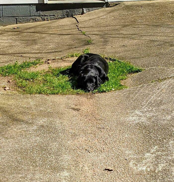 Tenemos un patio lleno de hierba. Él prefiere su lugar personal en la entrada del coche