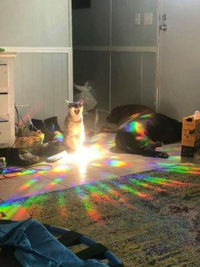 This Page Posts Pics Of Animals With Powerful Auras, And Here Are 50 Of The Most Interesting Pics (New Ones)