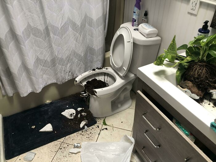 Wife Bought A New Plant Pot And Put It On The Shelf Over The Toilet. And Hour Later We Heard A Crash...