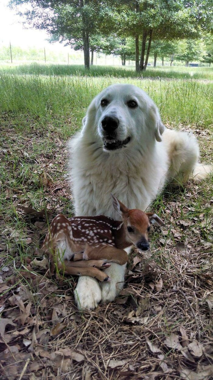 Just An Old Dog And His Little Buddy