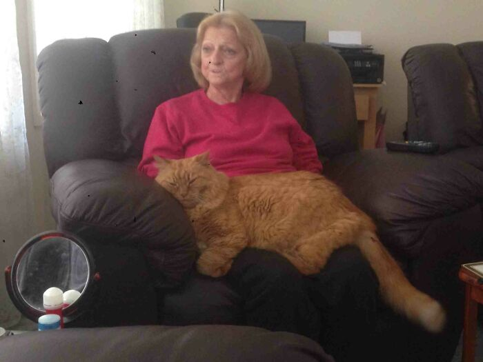Finally Got A Photo Showing How Huge My Parents Cat Is
