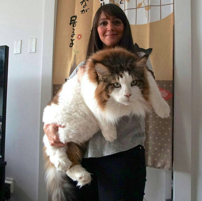 Thats A Very Big Cat