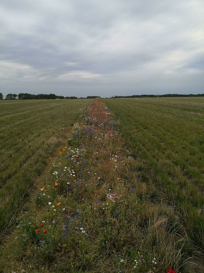 """Our Local Farmers Have Established So-Called """"Flora Belts"""" For The Bees In Their Fields (Funen, Denmark)"""