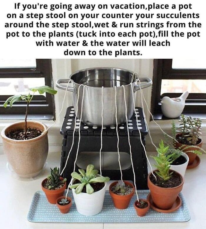 Watering Your Plants While On Vacation