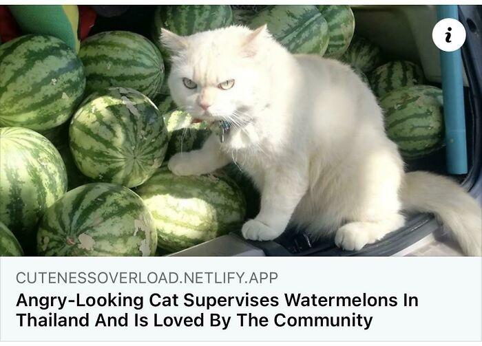 Melon Cop