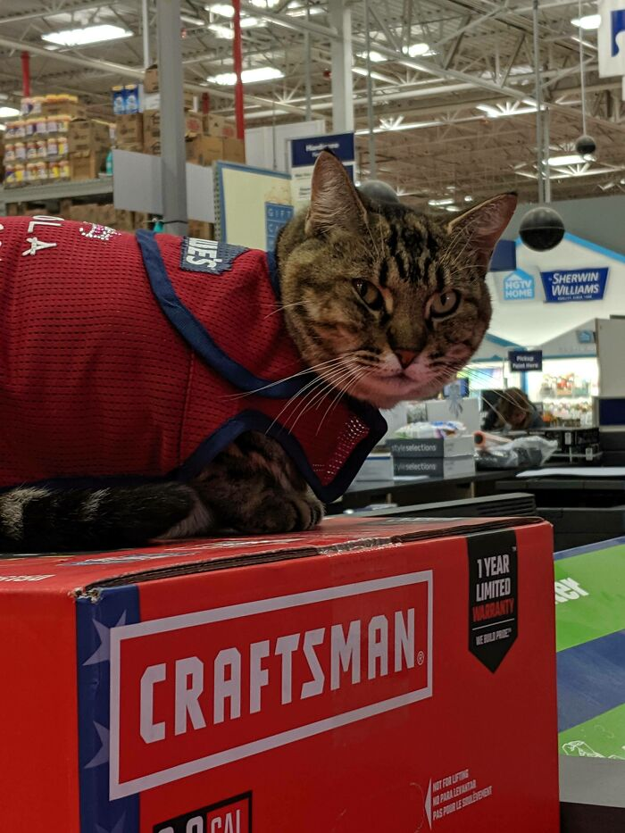 This Is Lola. She Works At Lowe's