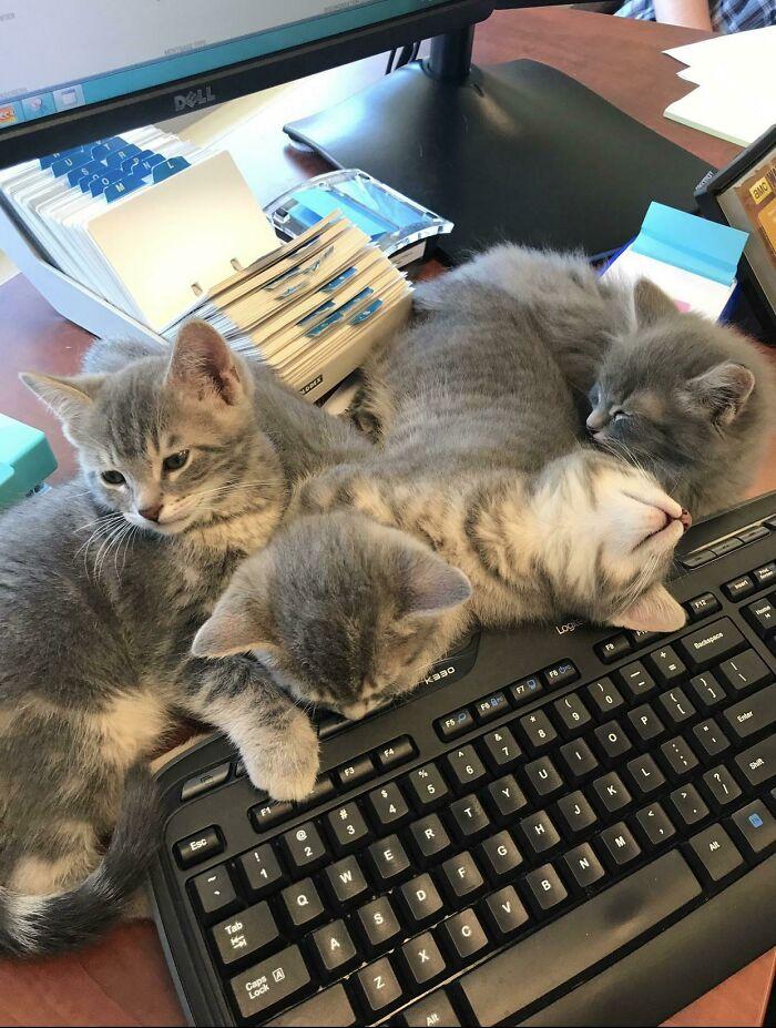 The Whole Kitten Receptionist Team, Working Hard!