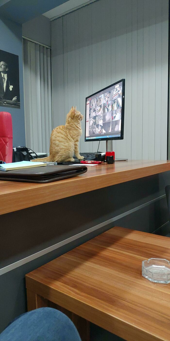 Head Of Security. His Name Is Portakal (Orange In Turkish) And He Loves Watching Security Footage