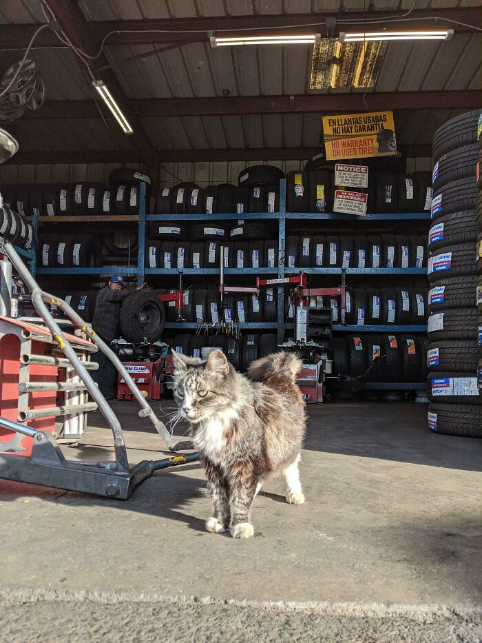 Owner/Shop Manager For 14 Years