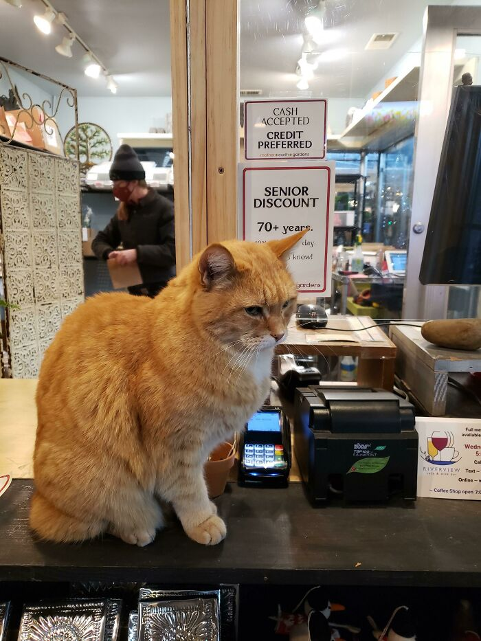 Local Garden Store Cashier Is Employee Of The Month... Coworkers Blame Nepotism
