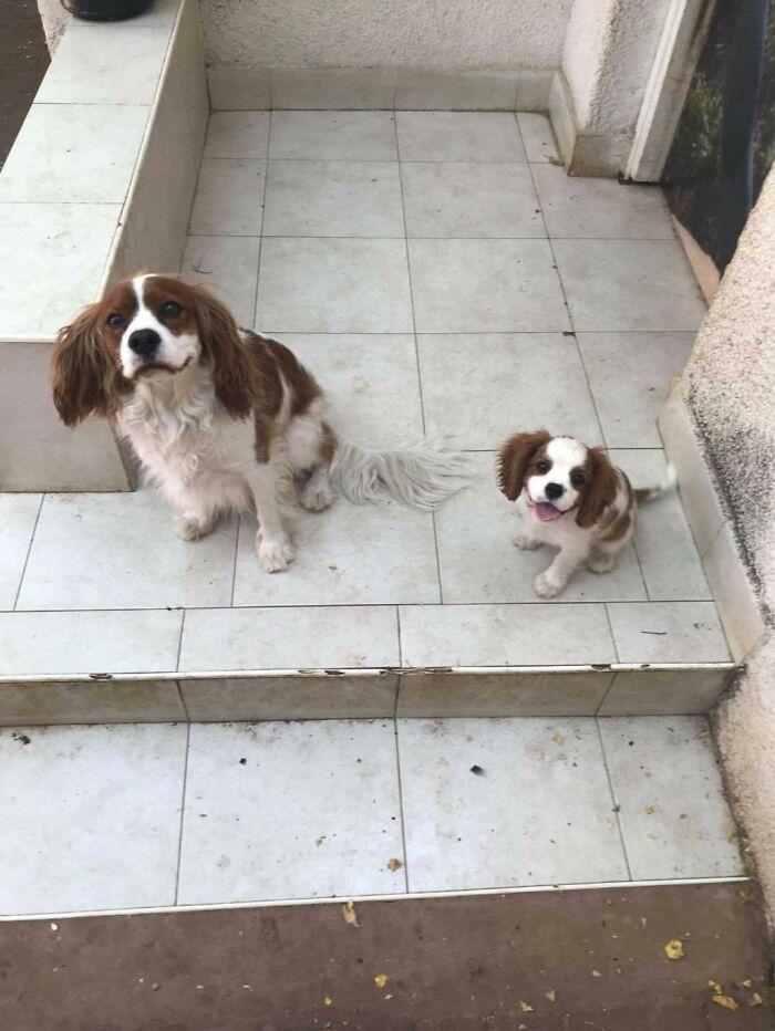 Hace unas semanas adopté un cachorro (a la derecha) y hoy ha aparecido un nuevo perro delante de la puerta y parece que es el mismo perro del futuro y está intentando advertirse a sí mismo de algo
