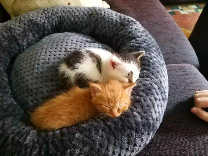 Los gatitos que acabo de adoptar