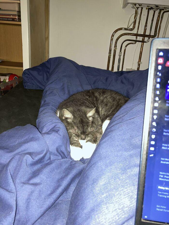 Recientemente adopté un gato callejero, hace dos semanas no quería estar en la misma habitación que un humano. Esta noche, arañó la puerta de mi habitación para entrar. Sin embargo, ¡no se toca!