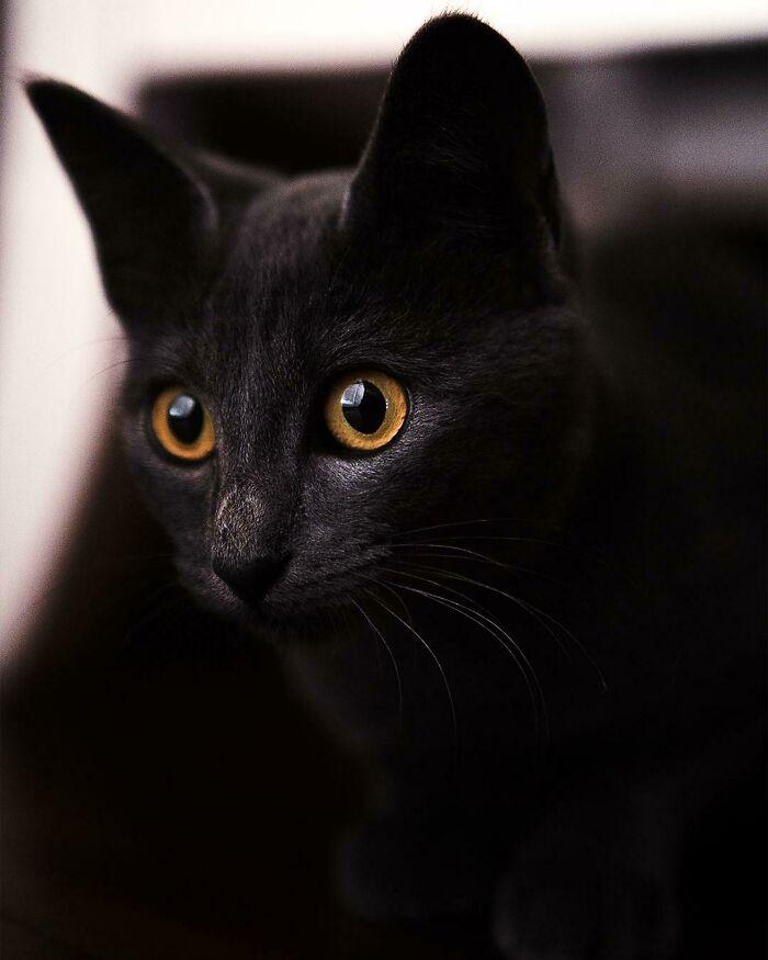 He querido adoptar un gato durante mucho tiempo y finalmente tuve la oportunidad de hacerlo. ¡Aquí está Kiki, mi gatito de 3 meses!