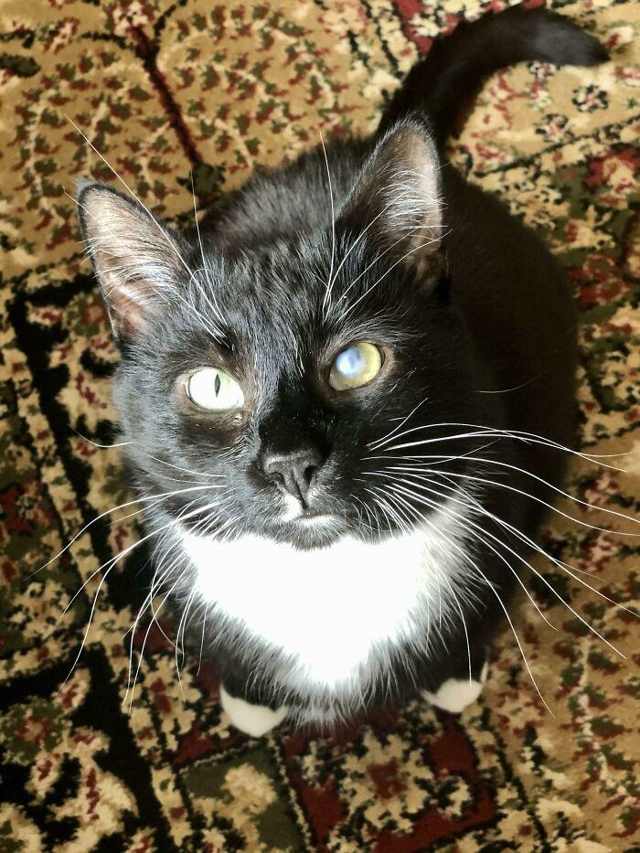 Leí aquí ayer que los gatos negros no son adoptados tanto porque no salen bien en las fotos. Conoced a Morningstar