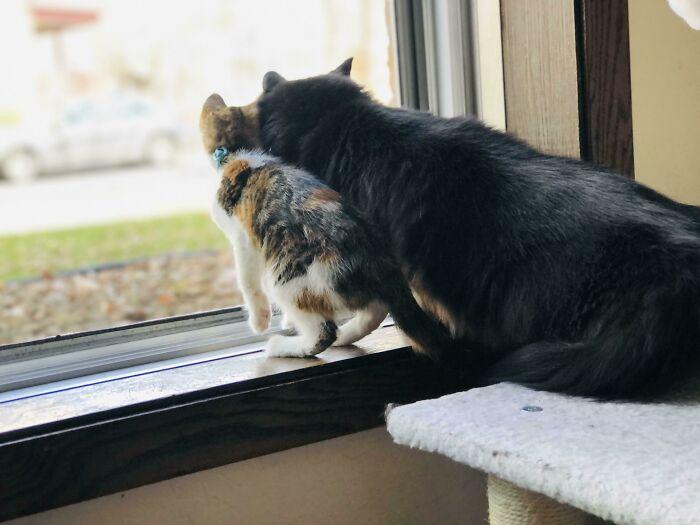 Adoptamos a la gatita más pequeña hace 3 días. Se han unido tan rápidamente