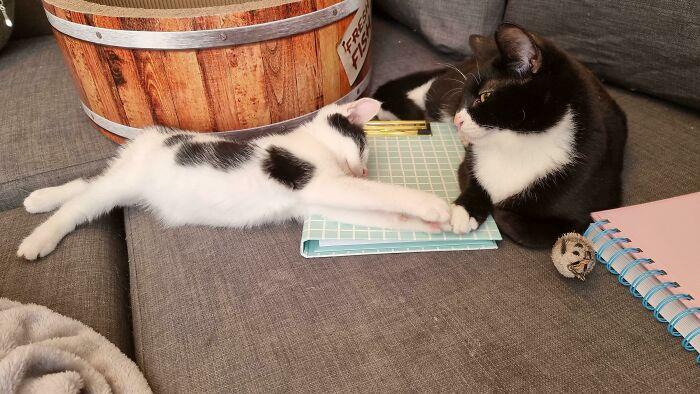 Adopté dos gatitos con necesidades especiales por separado. Hoy se han dado la mano