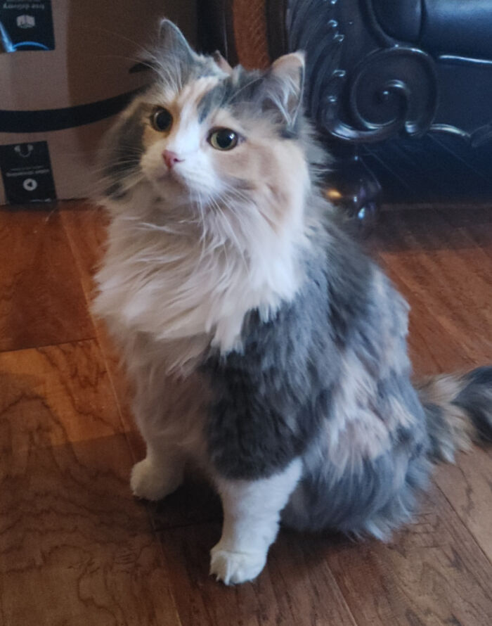 Adoptamos a esta gata de cinco años en un refugio la semana pasada, la adoro y ella nos adora. No podría pedir una chica mejor, Rosie