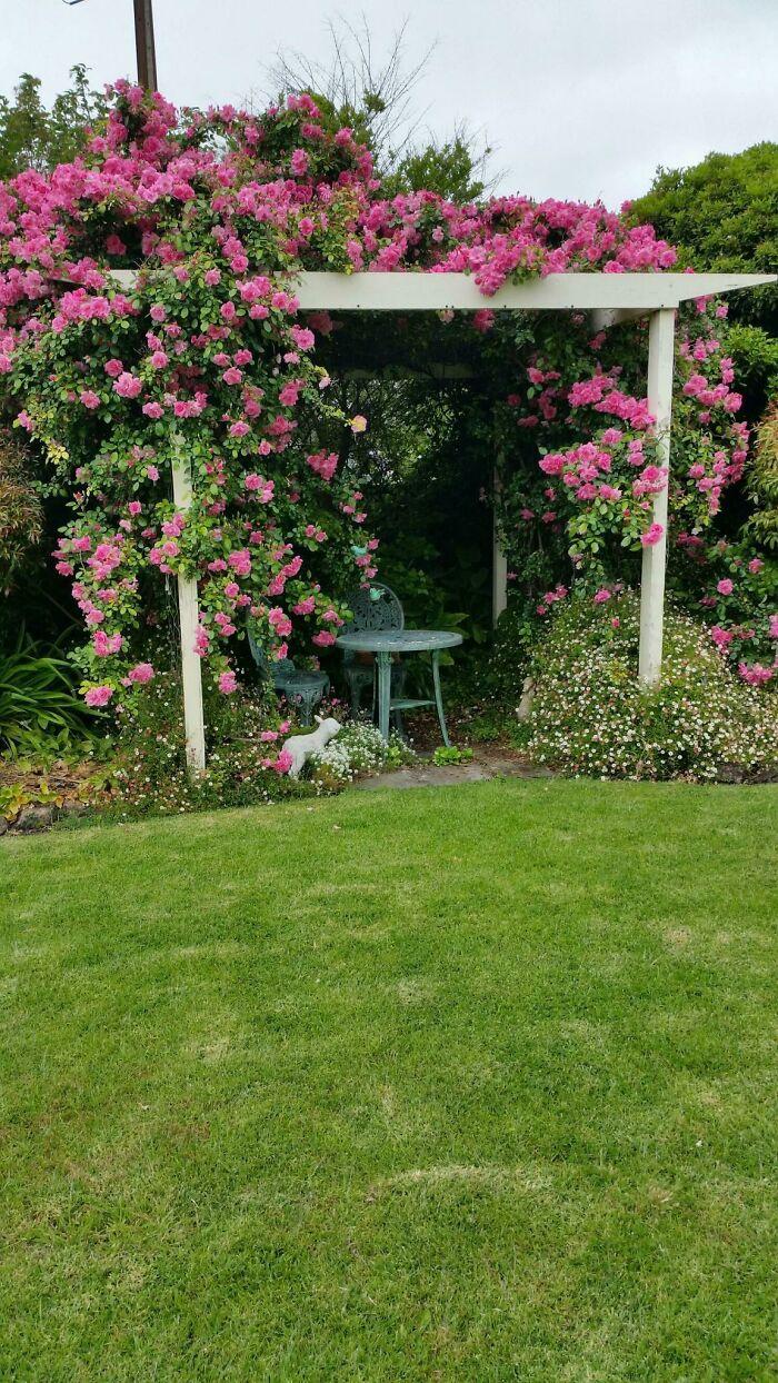 My Grandma Is Very Proud To Show You Her Garden
