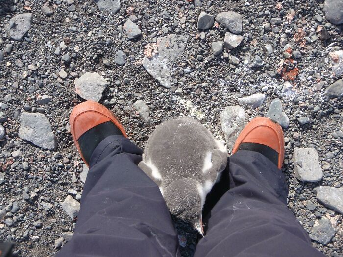 That Time I Became A Mother In Antarctica
