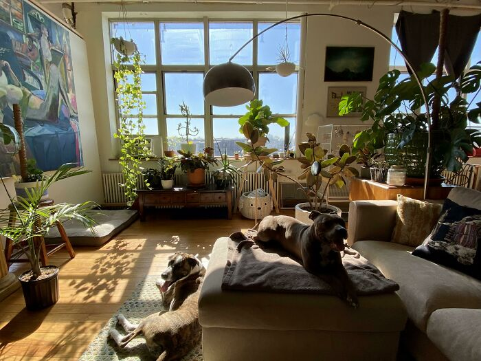 Plants And Pups Basking In The Morning Sun