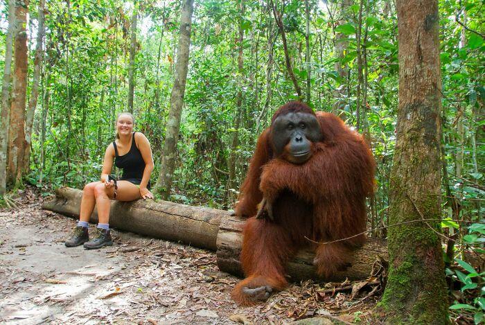 Size Of Orangutan Compared To A Human