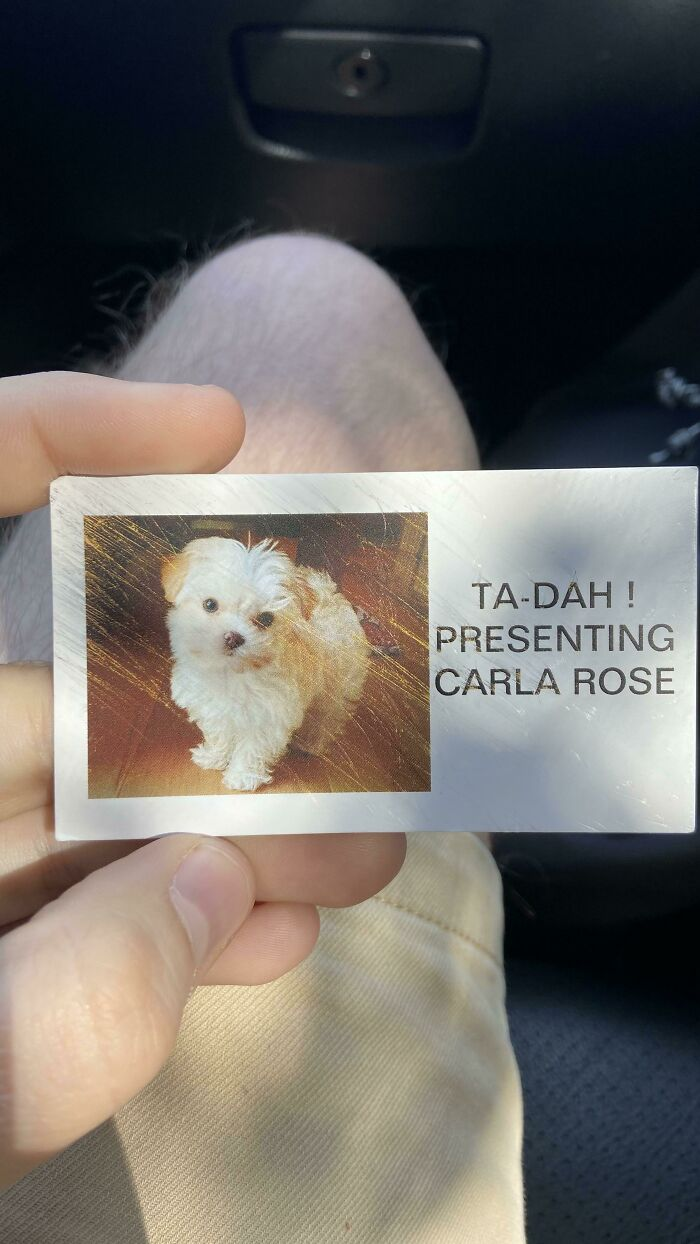 Found On The Floor Of A Target. Meet Carla Rose