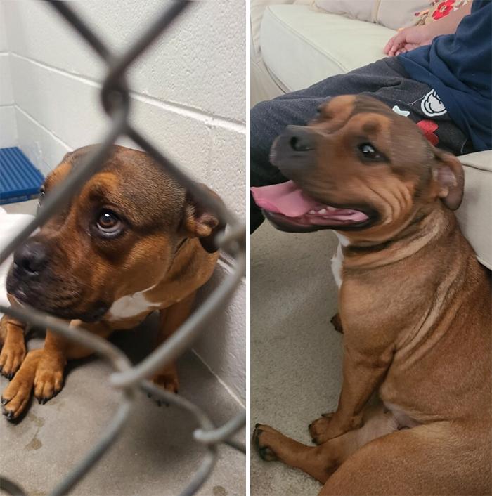 Antes y después de la adopción. Conoce a Dixie