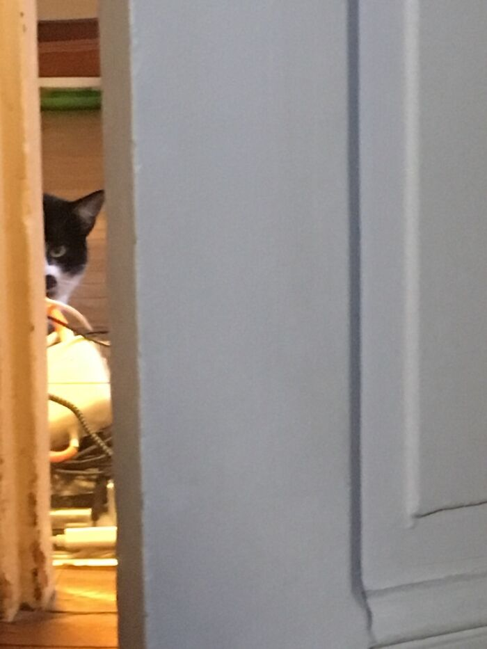 A Rare Image Of My Very Shy Foster