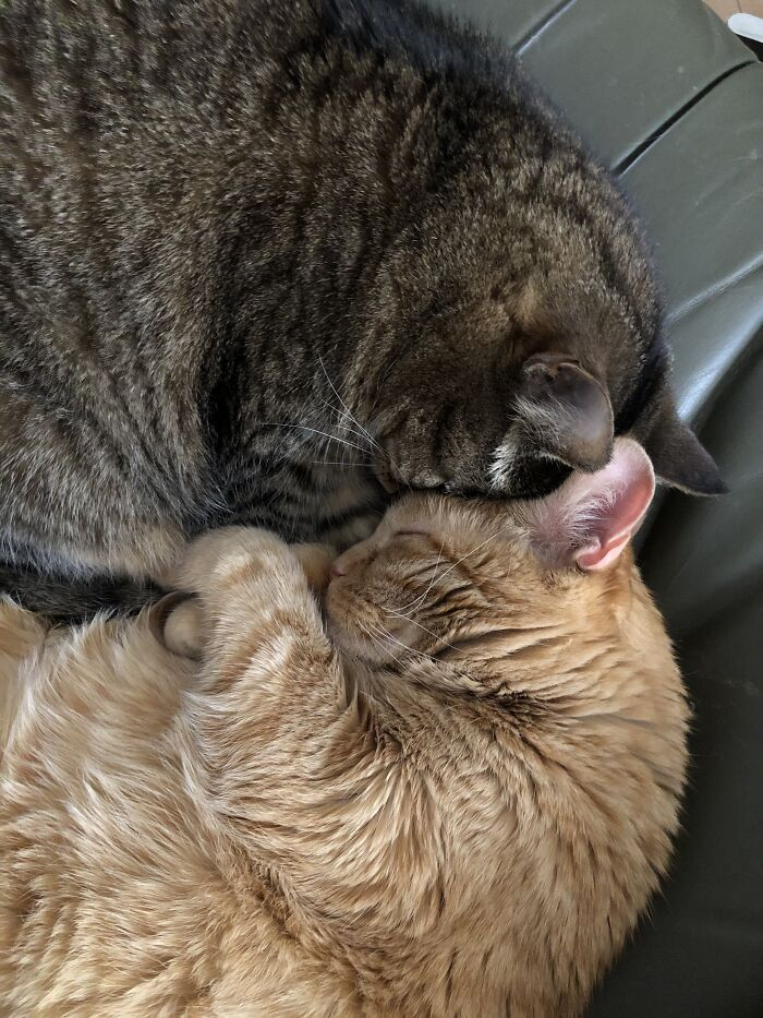 The Girls At 13. Orange Sarah Had To Stay At The Vet, Tabby Nini Must Have Been Lonely.
