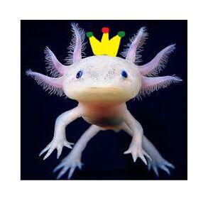 Axolotl King