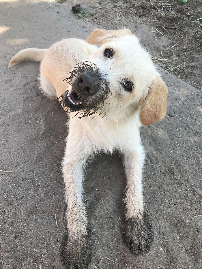 Cato, The Rescue Dog Grom Greece