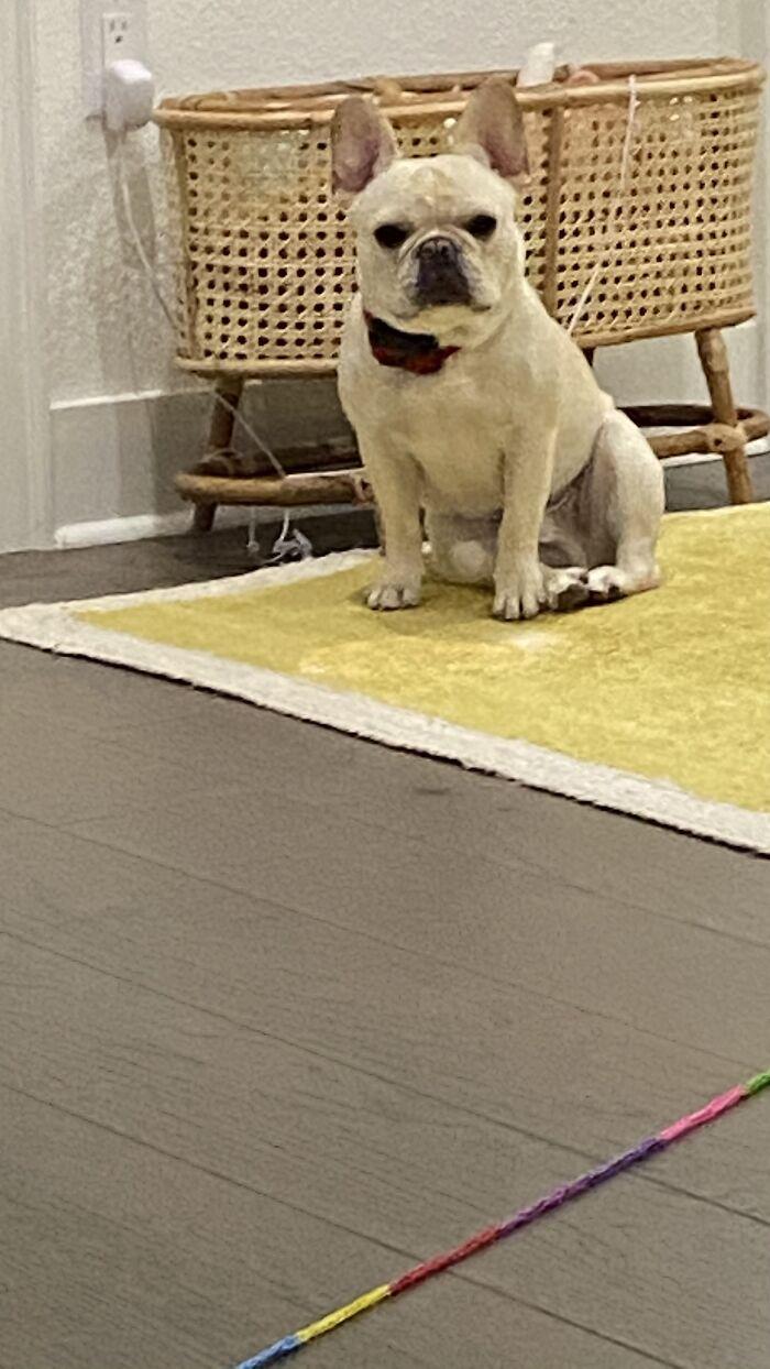 My Dog Carl Mid Tea Party.