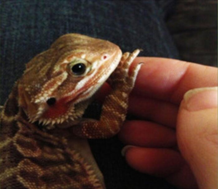 I'm More Of A Reptile Lover🥰 Roxy