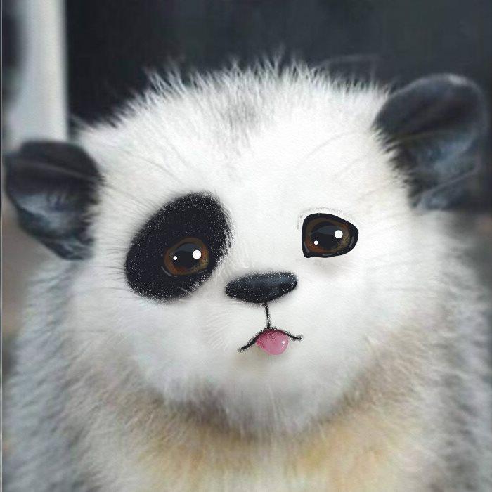 Pandapossum, Very Bored