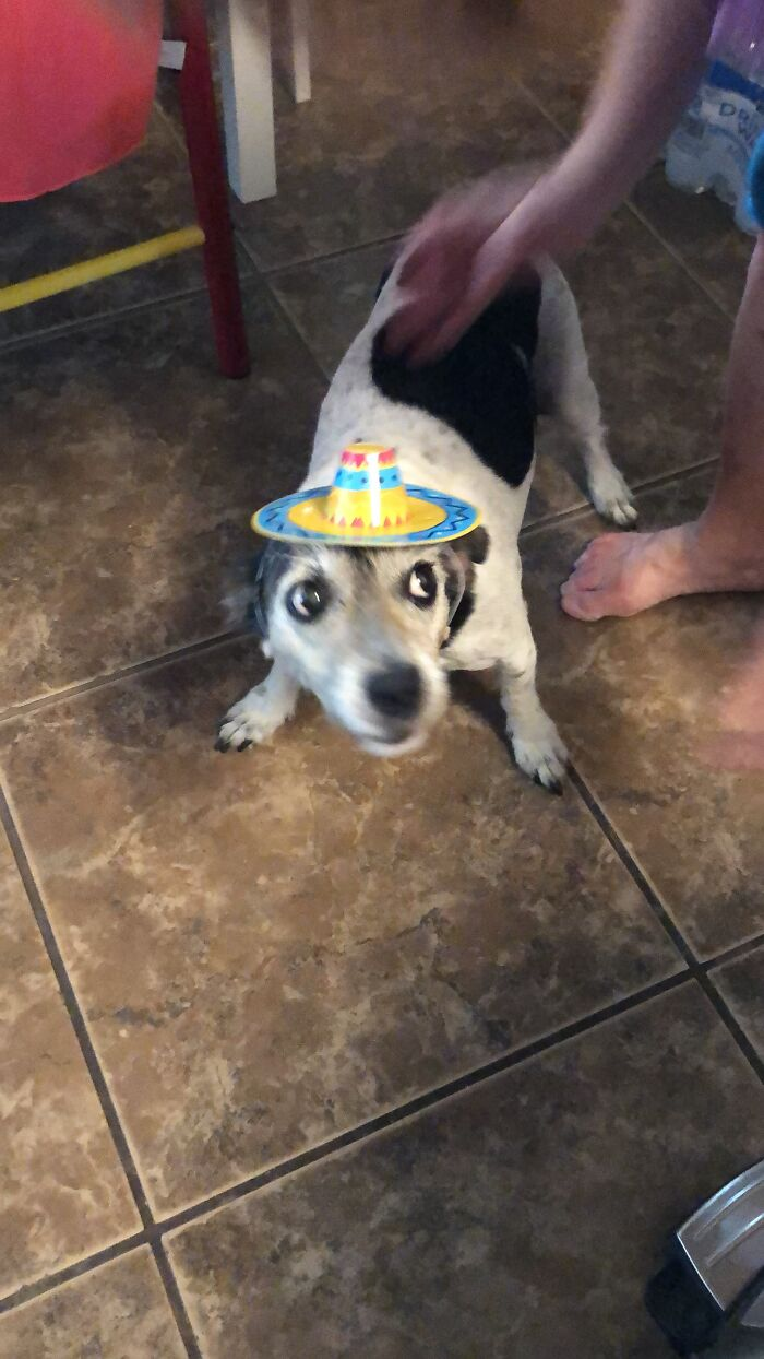 Put The Sombrero On The Dog, She Said! It'll Be A Cute Picture, She Said!