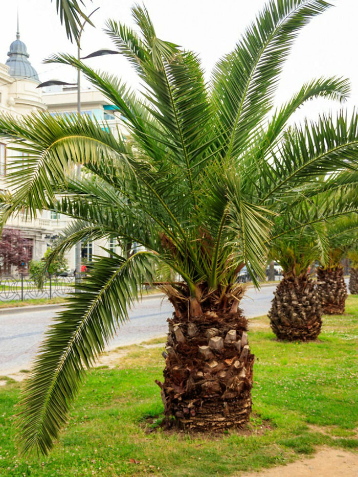 I Didn't Take This Picture. I Randomly Searched Up Palm Tree For Literally No Reason A Few Years Ago And Saved The Image. Then I Went On With My Day.