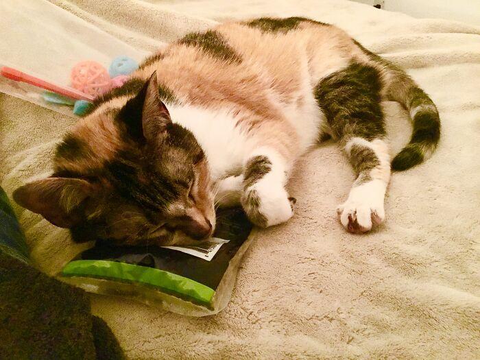 Skip The Toys. Her Favorite...catnip