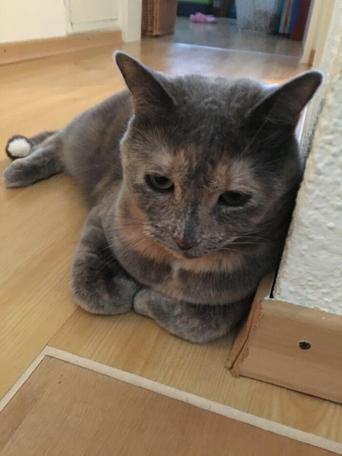 My Cat Poppy