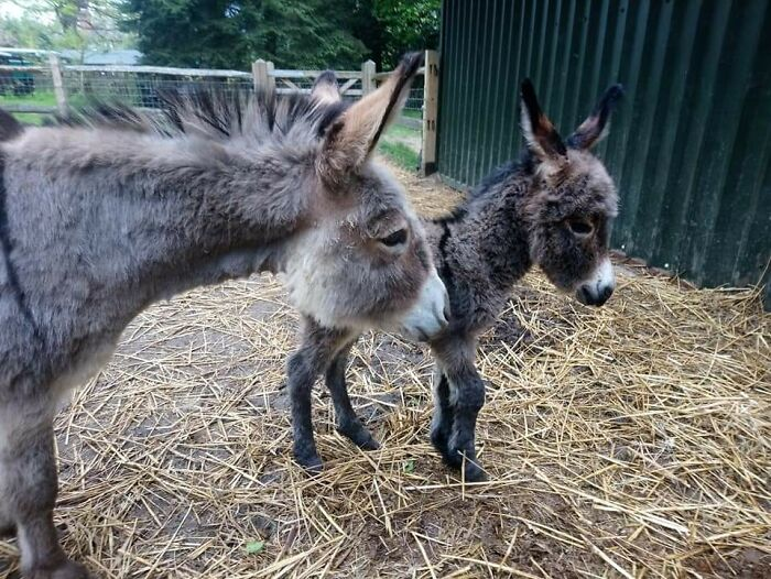 This Mum Pixie With Her Little Woollen Handful (Name Still Undecided)