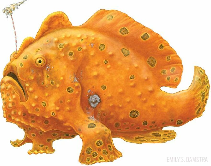 The Frog Fish