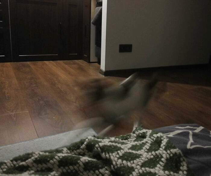There Is A Cat In This Photo. Tried To Catch Him Playing With An Ice Cream Packaging. Capturing A Cat In Motion Is Still An Unreachable Goal