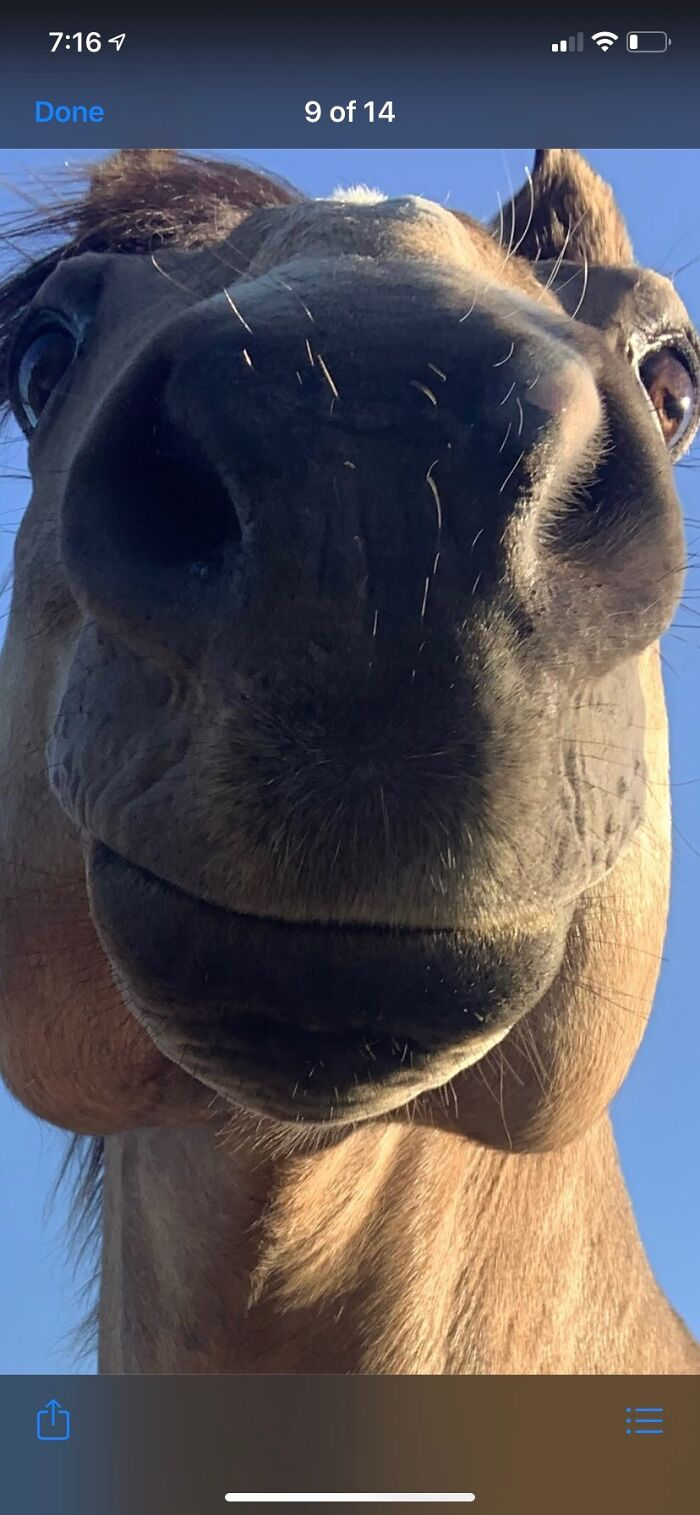 My Sister's Horse Obie. Short For Obie Wan Kenobi, And He's Apparently Part Giraffe